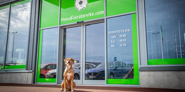 Myymälä koira odottaa asiakkaita